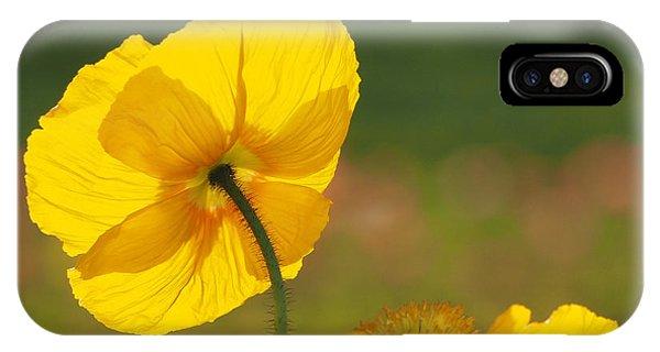 Poppies Seeking The Light IPhone Case