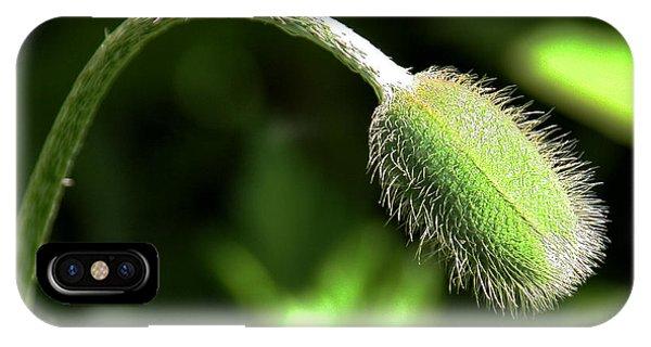 Poppy Bud In Sunlight IPhone Case