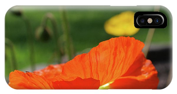 Poppy Cup IPhone Case