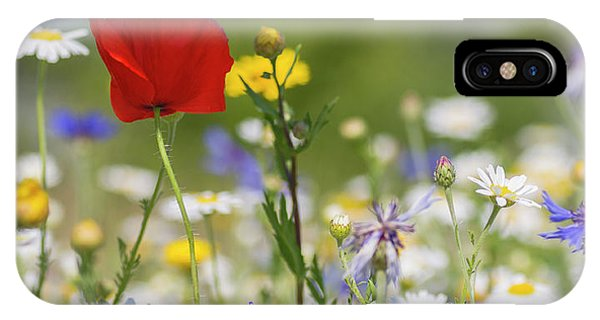 Poppy In Meadow  IPhone Case