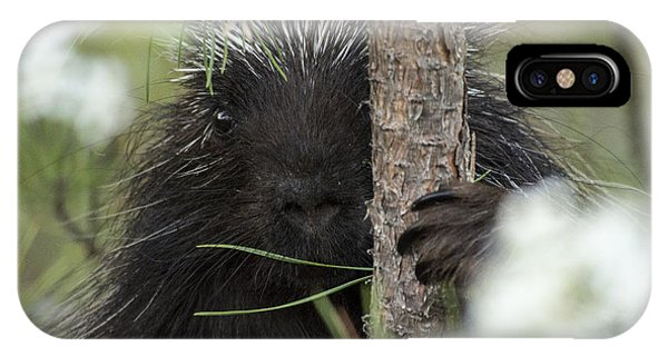 Porcupine Check-out IPhone Case
