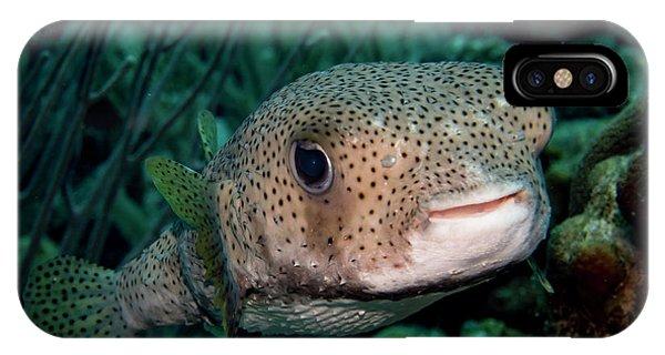 Porcupine Fish IPhone Case