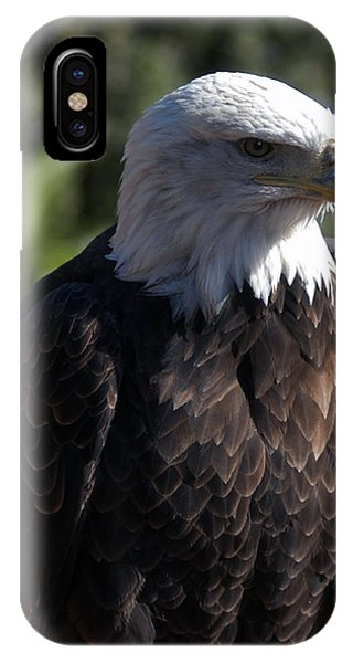 Portrait Bald Eagle  IPhone Case