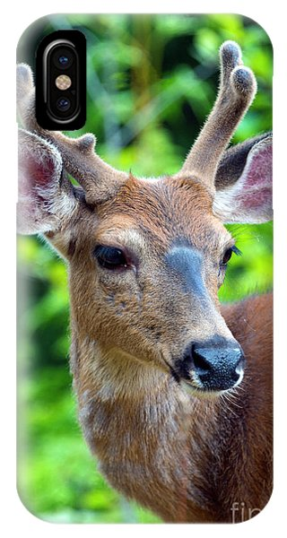 Mule Deer iPhone Case - Portrait In Velvet by Mike Dawson