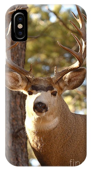 Portrait Of A 15-point Buck IPhone Case