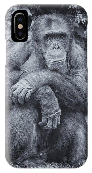 Portrait Of A Chimp IPhone Case