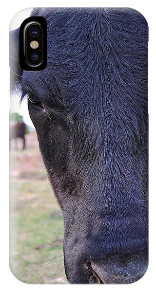 Portrait Of A Cow IPhone Case