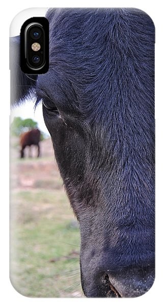 Portrait Of A Cow IPhone Case