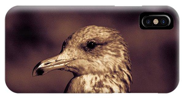 Portrait Of A Gull IPhone Case