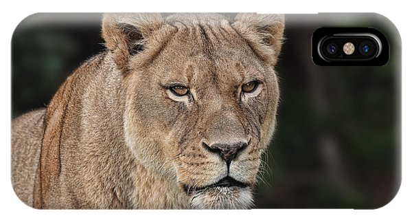 Portrait Of A Lioness II IPhone Case