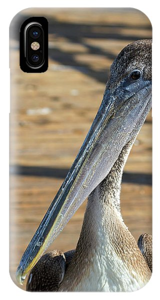 Portrait Of A Pelican On The Pier IPhone Case