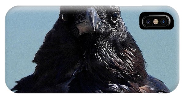 Portrait Of A Raven IPhone Case