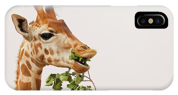 IPhone Case featuring the photograph Portrait Of A Rothschild Giraffe IIi by Nick Biemans