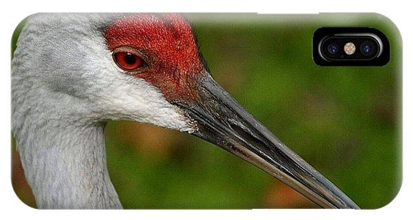 Portrait Of A Sandhill Crane IPhone Case