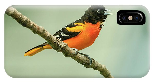 Portrait Of A Singing Baltimore Oriole IPhone Case