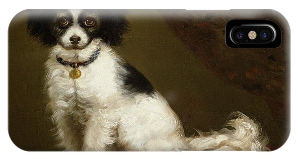 Pup iPhone Case - Portrait Of A Spaniel by Anonymous