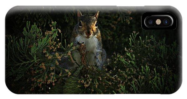 Portrait Of A Squirrel IPhone Case