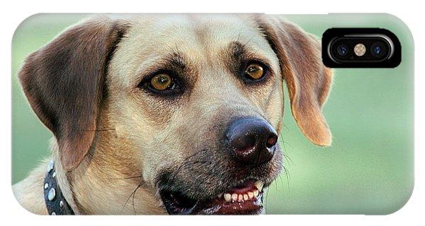 Portrait Of A Yellow Labrador Retriever IPhone Case