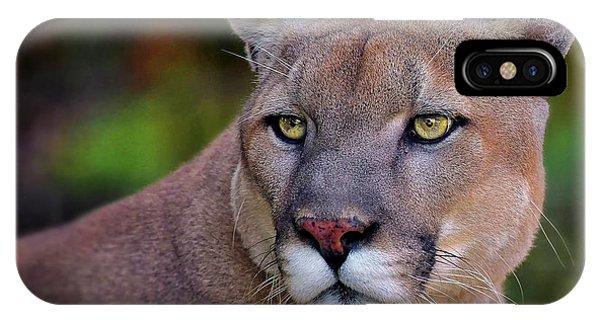 Portrait Of  Cougar  IPhone Case