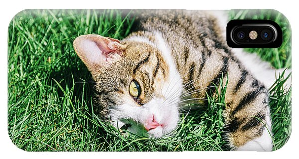 Portrait Of Cute Domestic Tabby Cat Playing In Grass IPhone Case