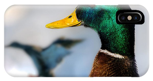 IPhone Case featuring the photograph Portrait Of Duck 2 by Bob Orsillo