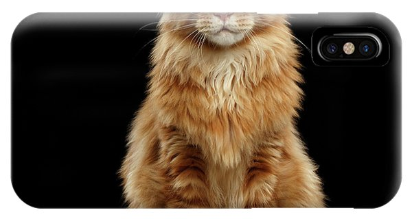 Portrait Of Ginger Maine Coon Cat Isolated On Black Background IPhone Case