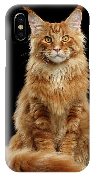 Cat iPhone X Case - Portrait Of Ginger Maine Coon Cat Isolated On Black Background by Sergey Taran