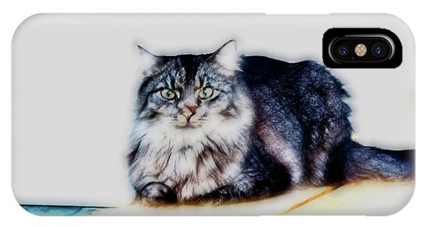 Portrait Of Maine Coon, Mattie IPhone Case