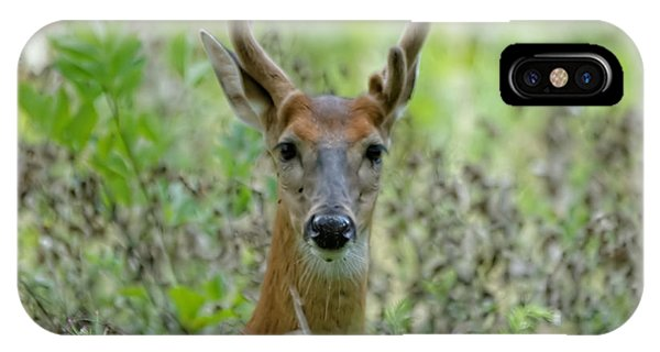 Portriat Of Male Deer IPhone Case
