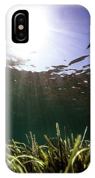 Posidonia IPhone Case