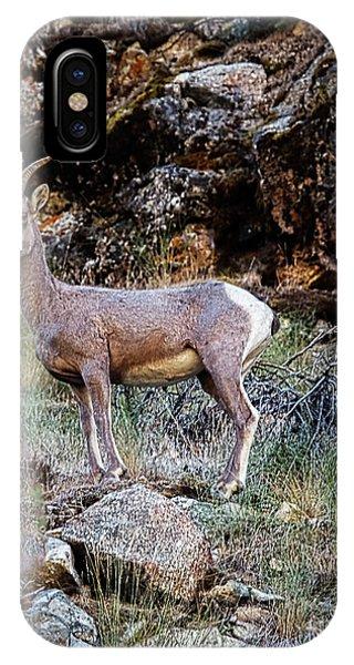 Rocky Mountain Bighorn Sheep iPhone Case - Posing Mountain Sheep by Robert Bales