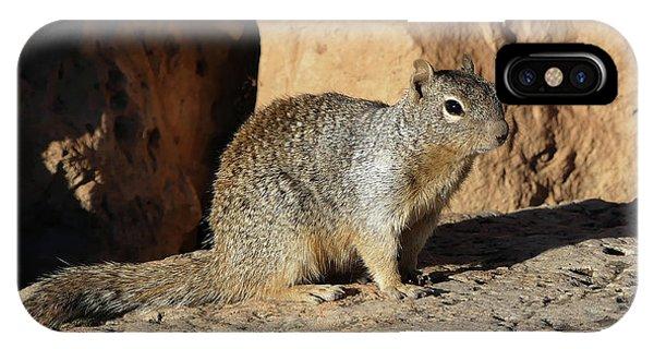 Posing Squirrel IPhone Case