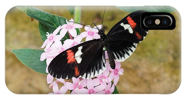 IPhone Case featuring the photograph Postman Butterfly, Heliconius Melpomene by Paul Gulliver