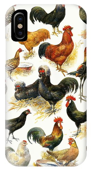 Barnyard iPhone Case - Poultry by English School