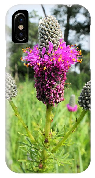 Prairie Clover IPhone Case