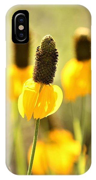 Prairie Coneflower In Morning Light IPhone Case