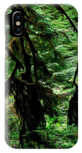 Prairie Creek Redwoods State Park 12 IPhone Case