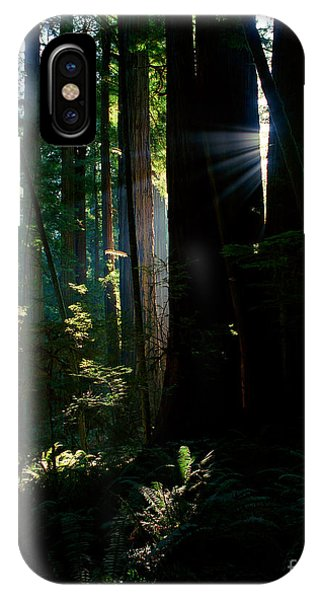 Prairie Creek Redwoods State Park 6 IPhone Case