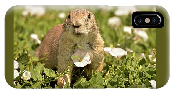 Prairie Dog IPhone Case