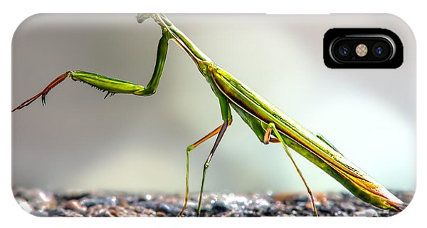 Insect iPhone Case - Praying Mantis  by Bob Orsillo