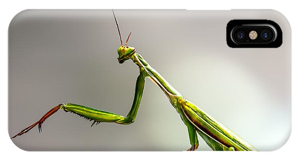 Insects iPhone Case - Praying Mantis  by Bob Orsillo