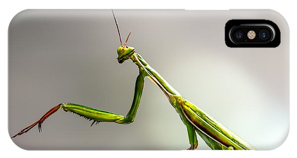 IPhone Case featuring the photograph Praying Mantis  by Bob Orsillo