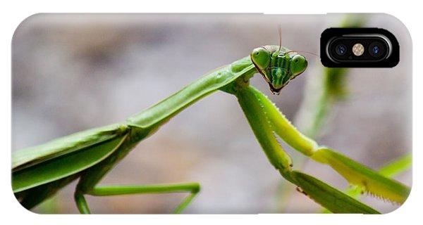 Praying Mantis Looking IPhone Case