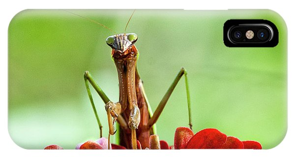 Praying Mantis On Zinnia IPhone Case