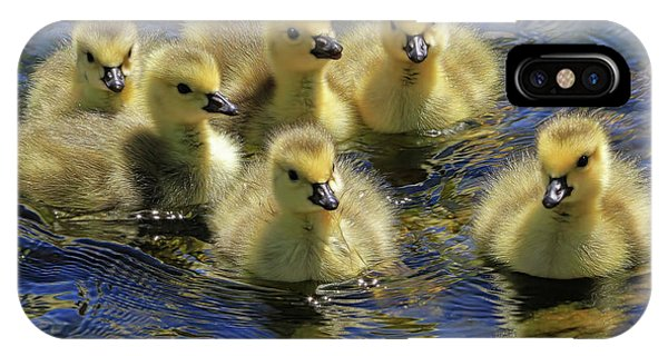 Goslings iPhone Case - Precious Goslings by Donna Kennedy