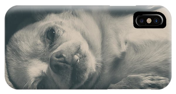 Chihuahua iPhone Case - Precious by Laurie Search