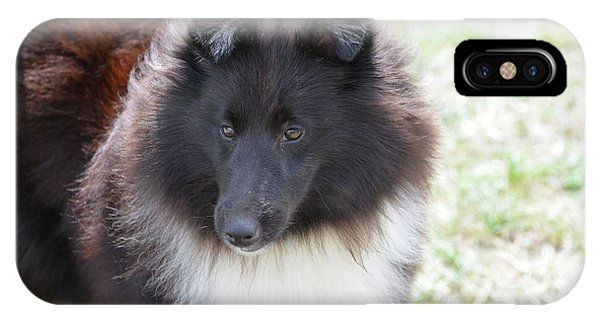 Pretty Black And White Sheltie Dog IPhone Case