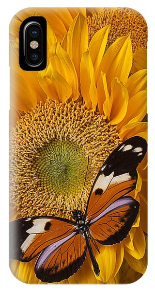 Golden iPhone Case - Pretty Butterfly On Sunflowers by Garry Gay