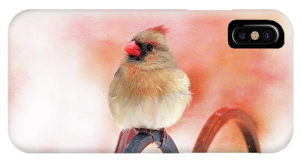 Pretty Cardinal IPhone Case