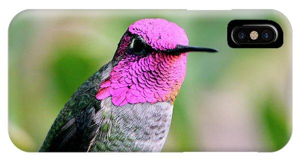 Pretty In Pink Anna's Hummingbird IPhone Case